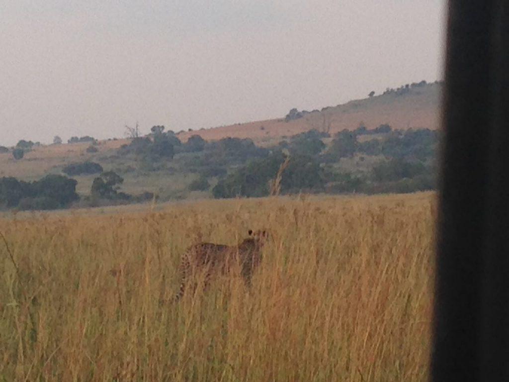 Reitvlei Nature Reserve - Cheetah
